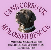 Cane Corso UK and Molosser Rescue