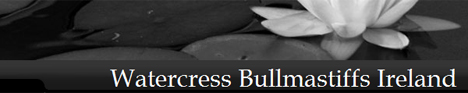Watercress Bullmastiffs